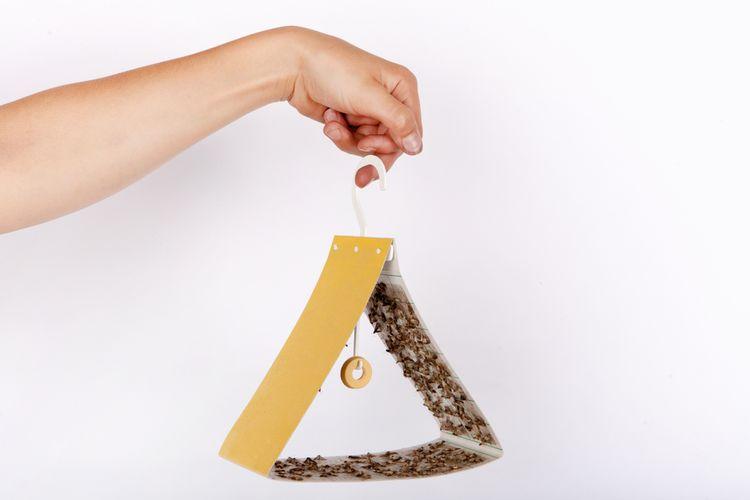 Jak vyhubit mole? Které přípravky jsou nejlepší