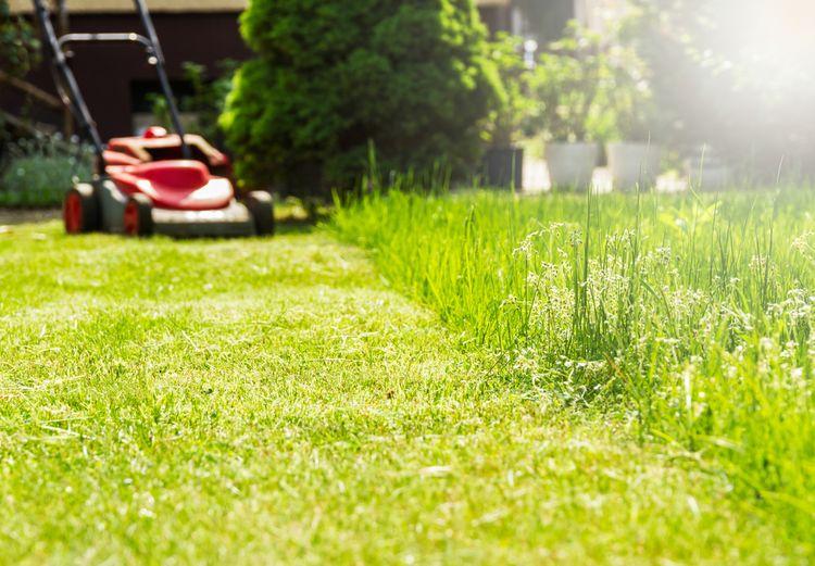 Sekání trávy s elektrickou sekačkou
