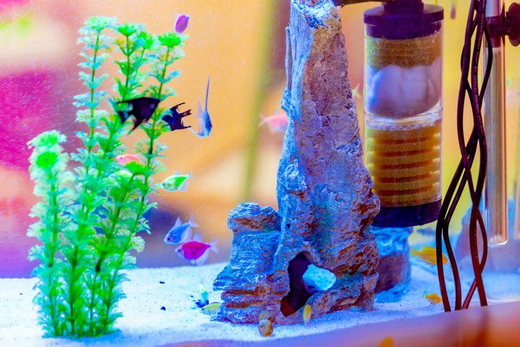 Filtr akvária slouží k odstraňování škodlivých látek