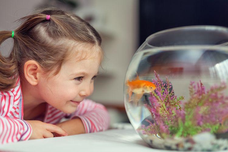 Jak vybrat a jak pečovat o akvárium. Set je vhodný pro začátečníky