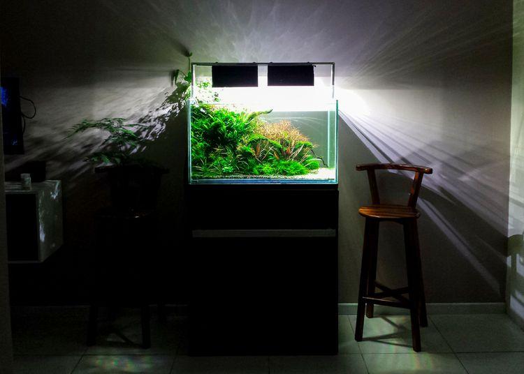 Osvětlené akvárium v obývacím pokoji