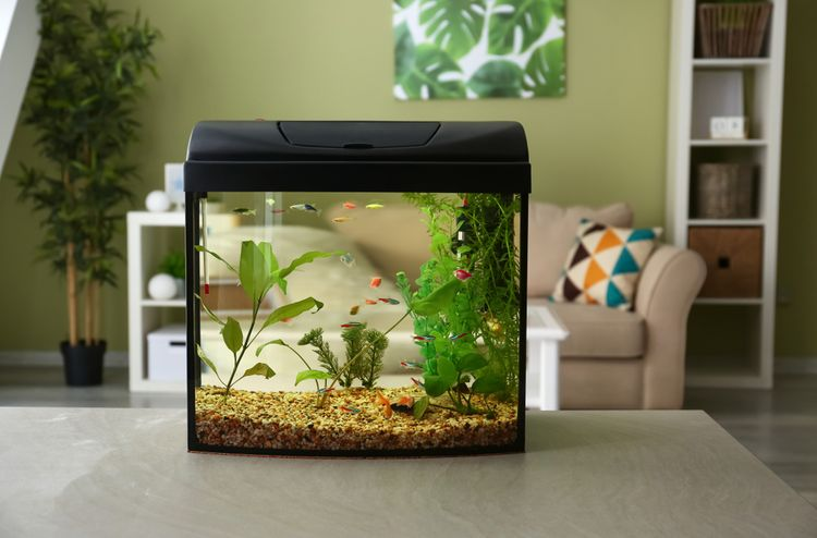 Pro rybky náchylné na choroby je vhodné druhové akvárium