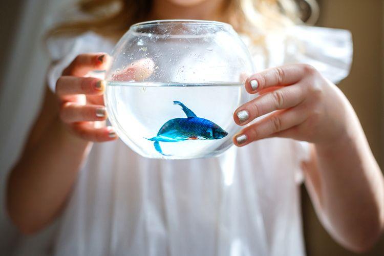 Mini akvárium pro jednu rybičku