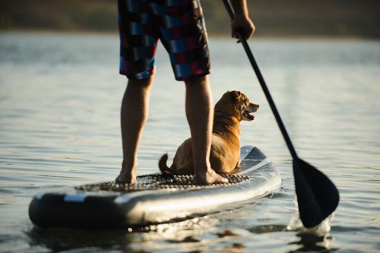 Pádlo paddleboard– rukojeť, žerď