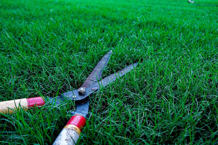 Čepele ručních nůžek na trávu
