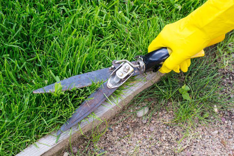 Jak vybrat nůžky na trávu?