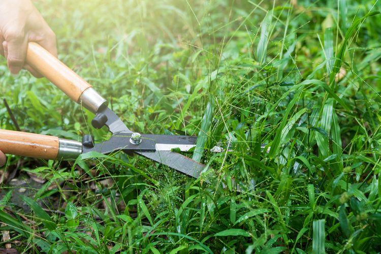 jak vybrat ruční nůžky na trávu