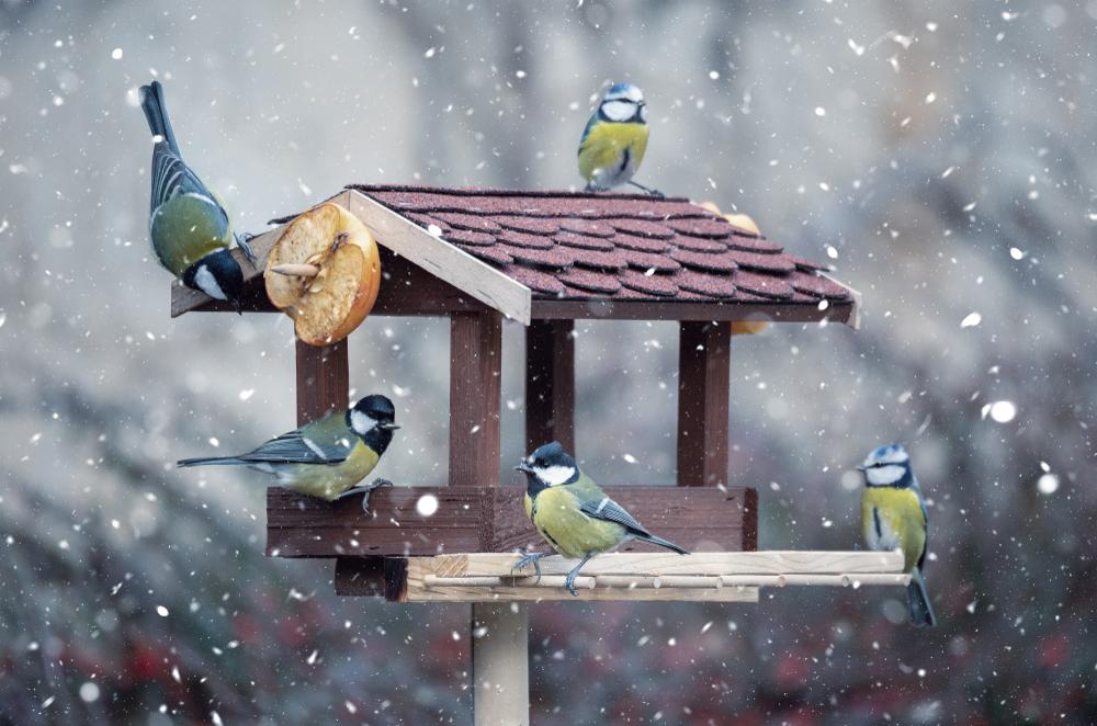 Dřevěné krmítko pro ptáky ve tvaru domečku