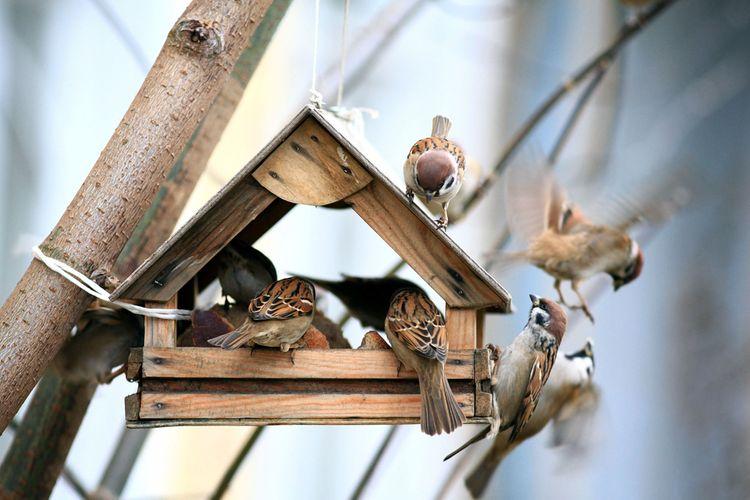Dřevěné krmítko pro ptáky