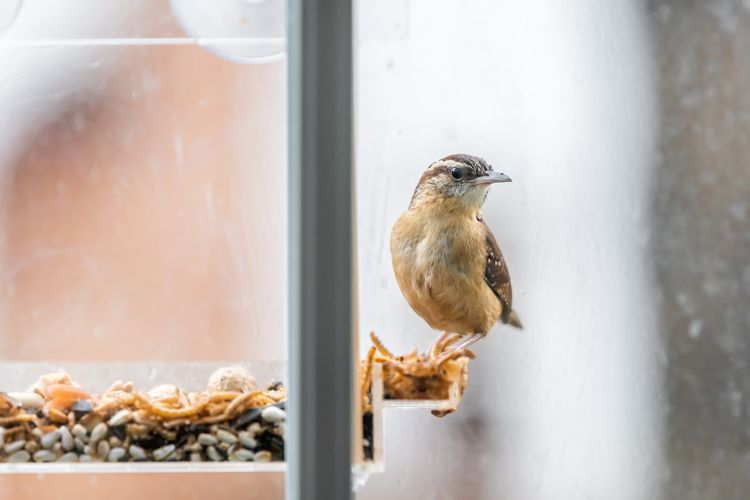 Krmítko pro ptáky na okno