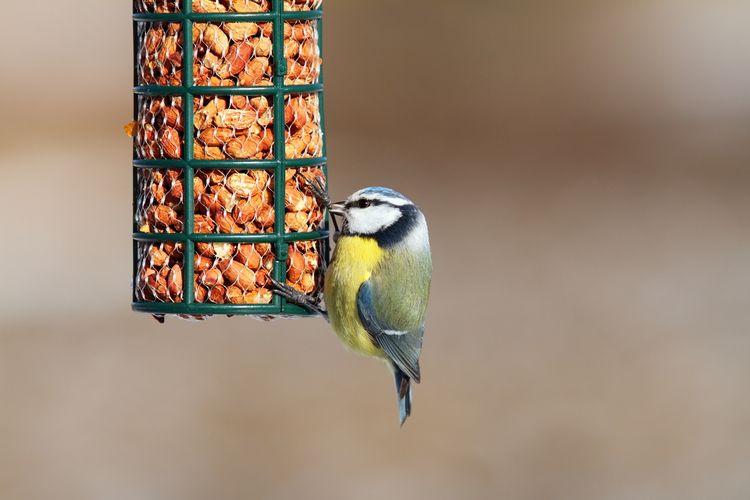 Jak vybrat krmítko pro ptáky?