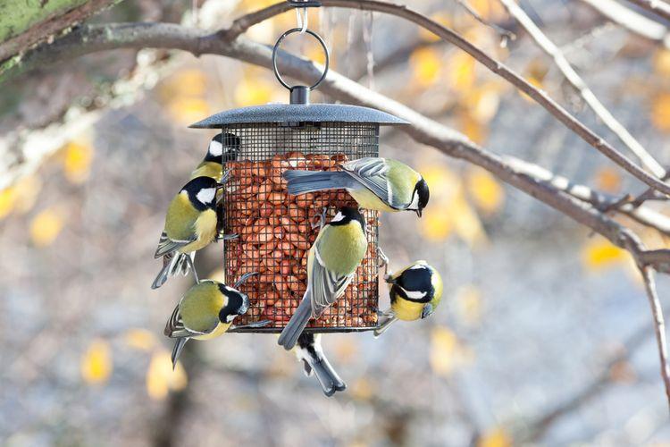 Kovové závěsné krmítko pro ptáky
