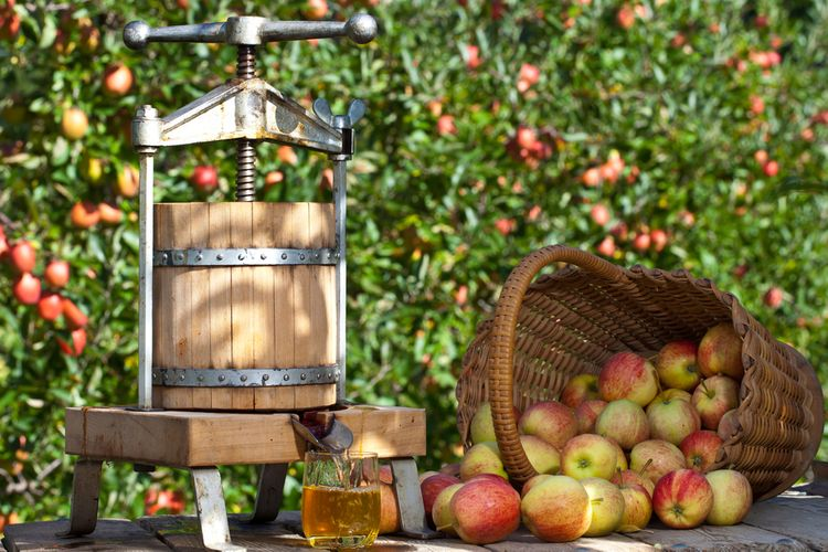 Jak vybrat lis na ovoce