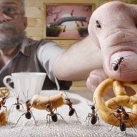 Jak se zbavit mravenců? Nejúčinnější přípravky na trhu